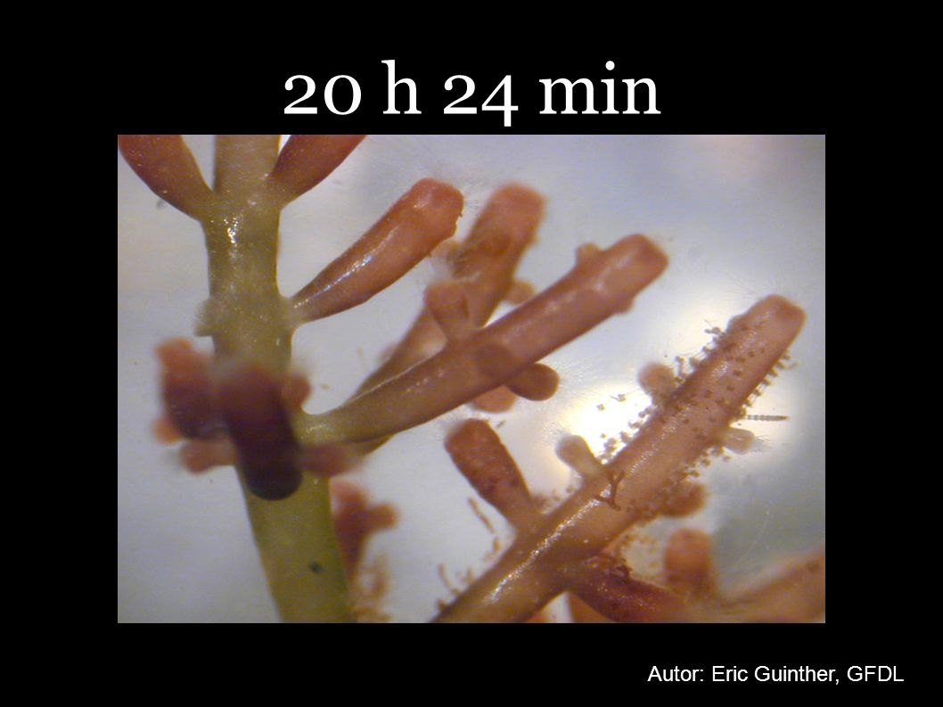 20 h 24 min Autor: Eric Guinther, GFDL
