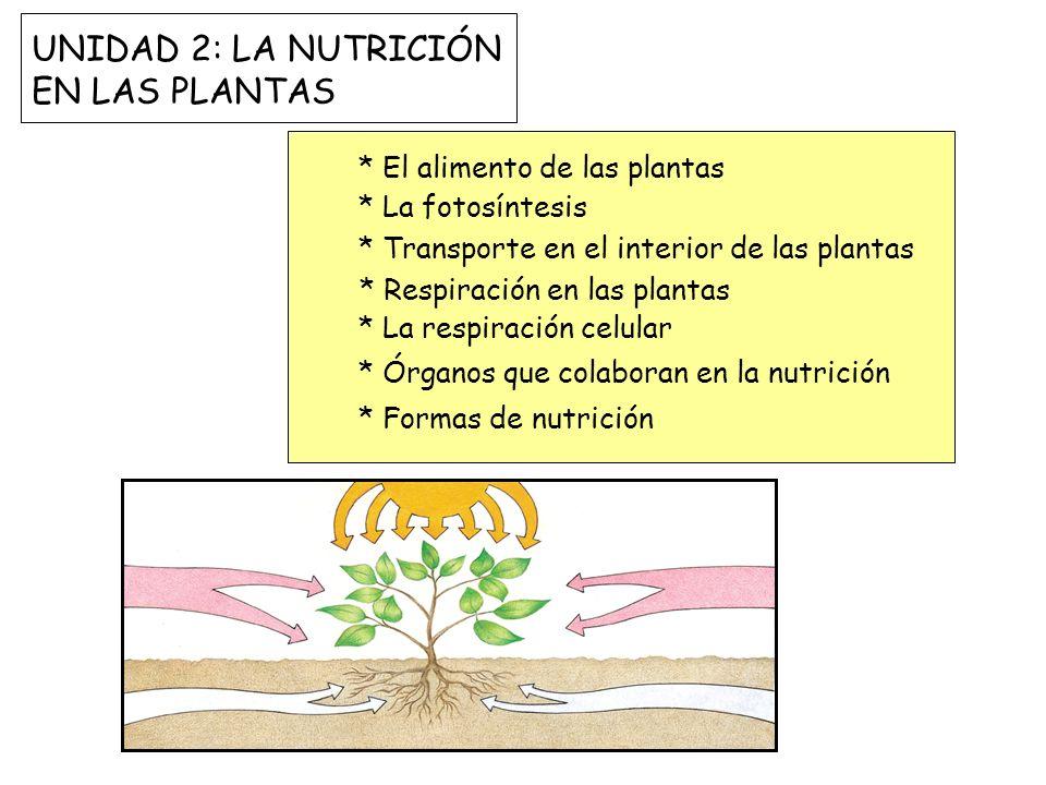 UNIDAD 2: LA NUTRICIÓN EN LAS PLANTAS