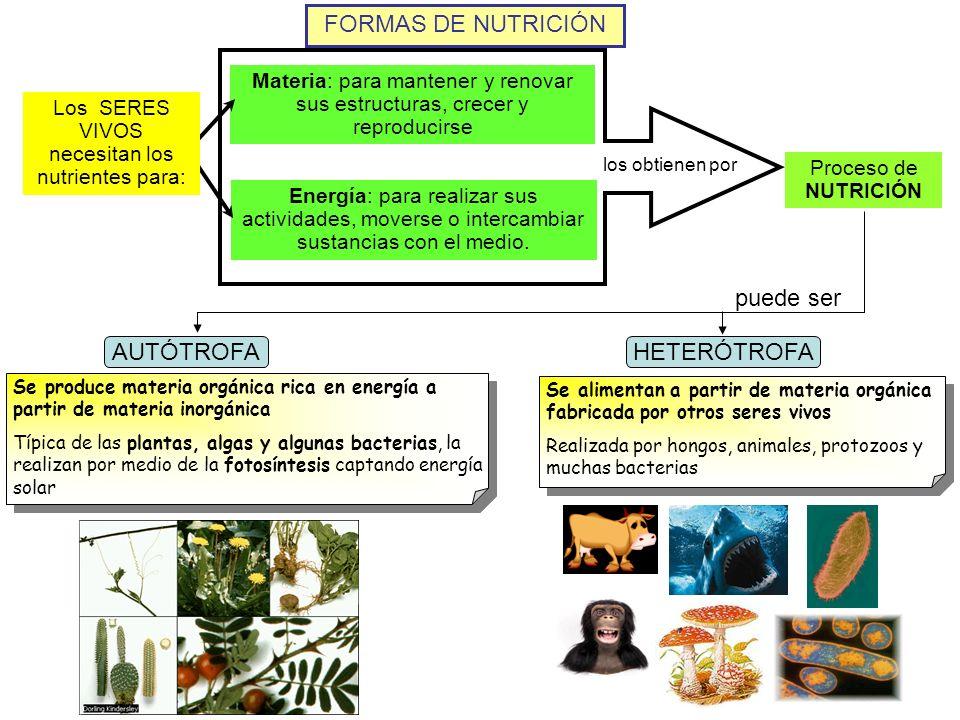 Los SERES VIVOS necesitan los nutrientes para:
