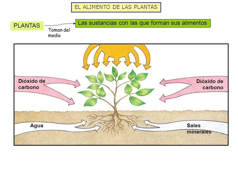 EL ALIMENTO DE LAS PLANTAS