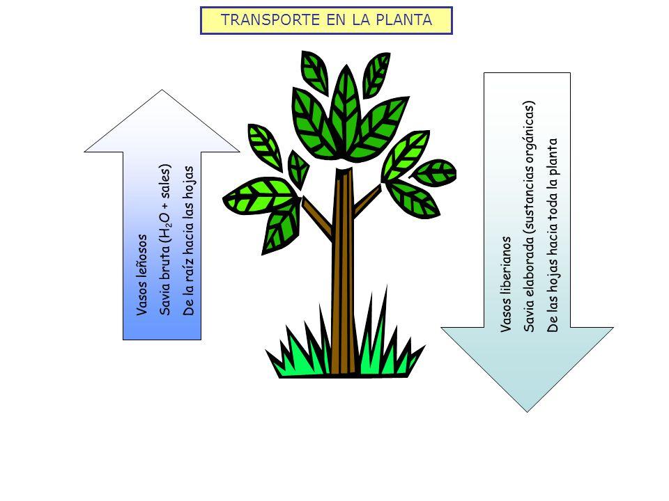 TRANSPORTE EN LA PLANTA