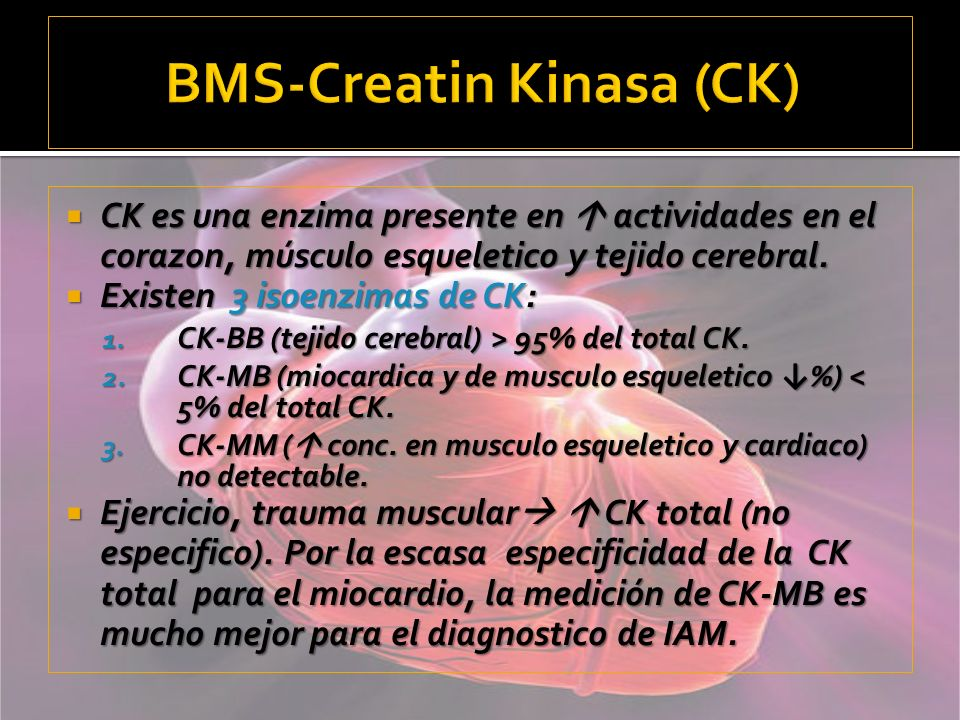 BMS-Creatin Kinasa (CK)