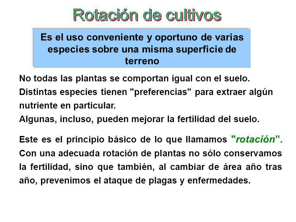 Rotación de cultivos Es el uso conveniente y oportuno de varias especies sobre una misma superficie de terreno.