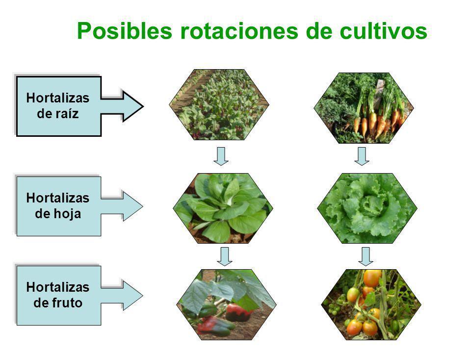 Posibles rotaciones de cultivos