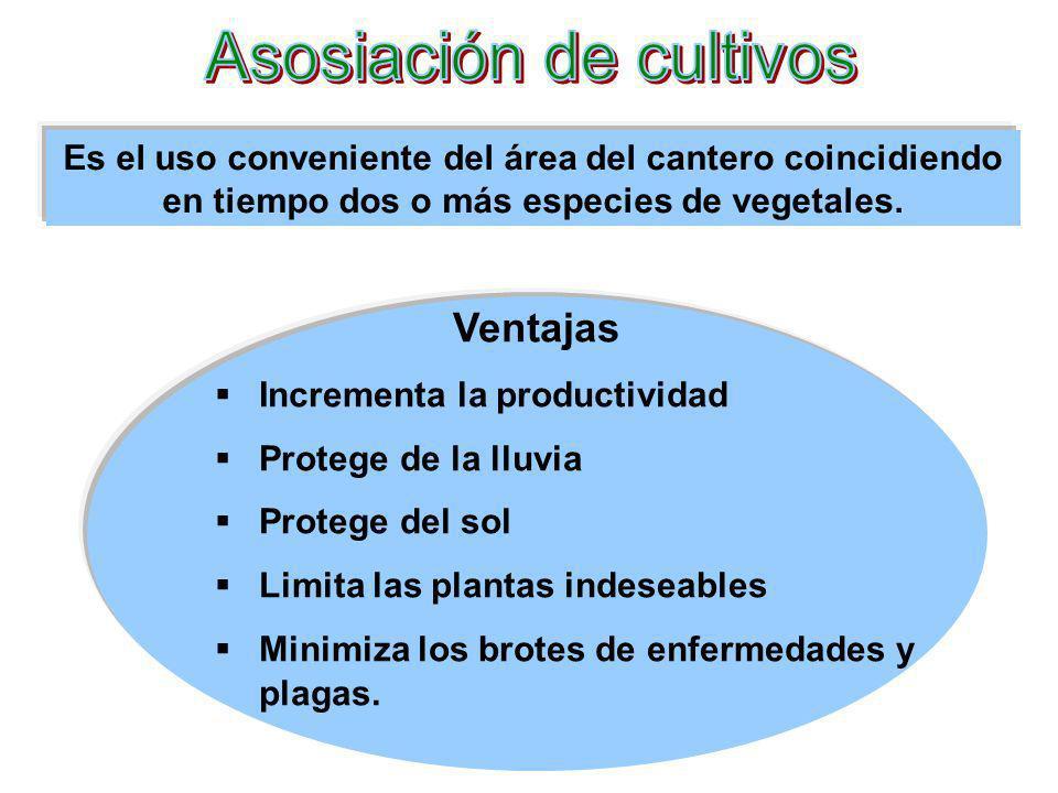 Asosiación de cultivos