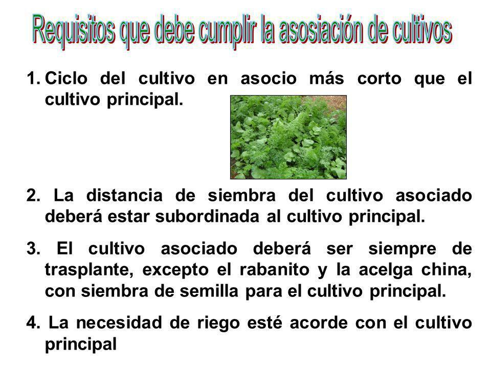 Requisitos que debe cumplir la asosiación de cultivos