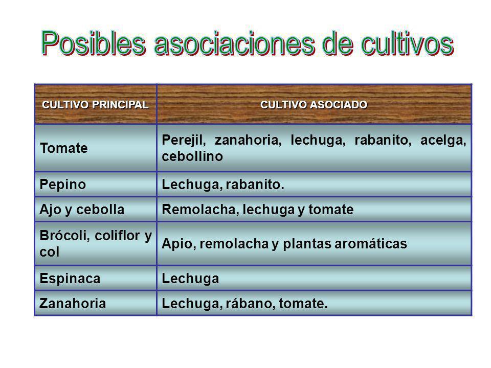 Posibles asociaciones de cultivos