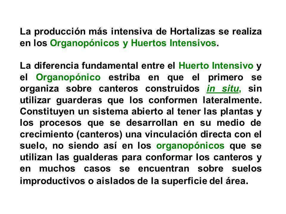 La producción más intensiva de Hortalizas se realiza en los Organopónicos y Huertos Intensivos.