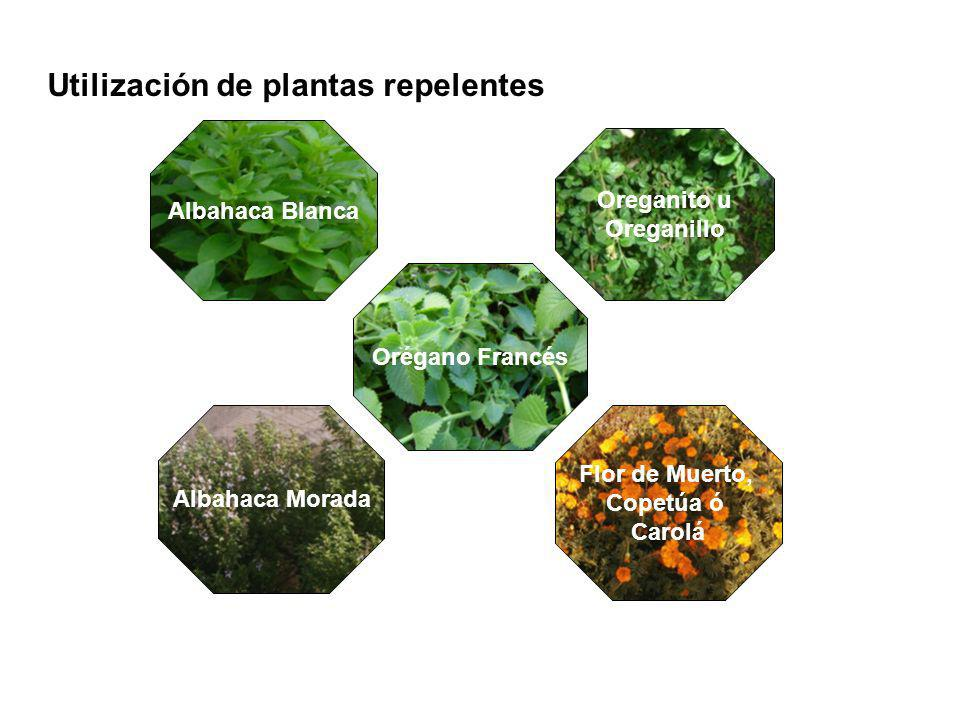 Utilización de plantas repelentes
