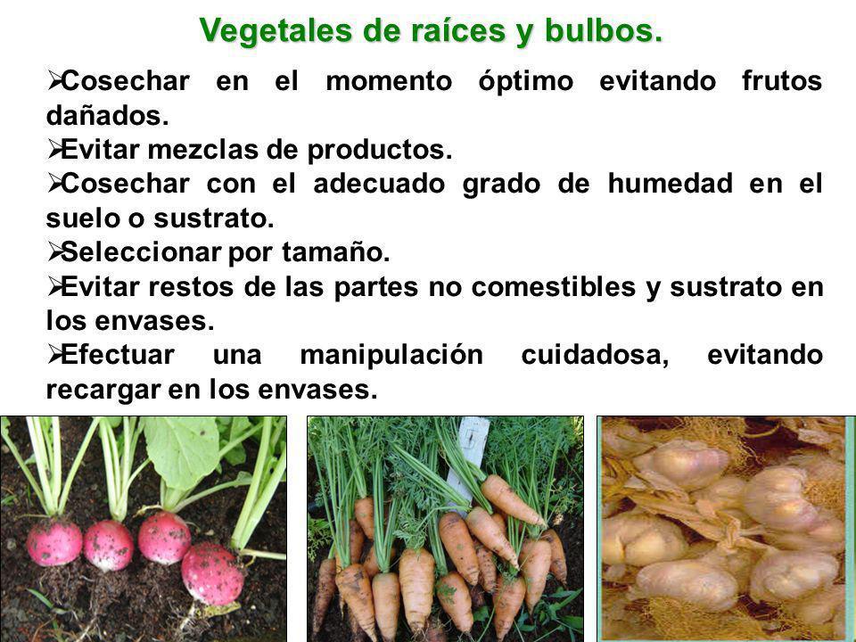 Vegetales de raíces y bulbos.