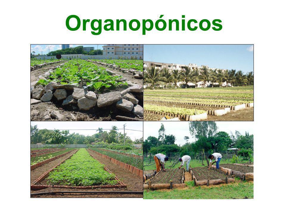 Organopónicos