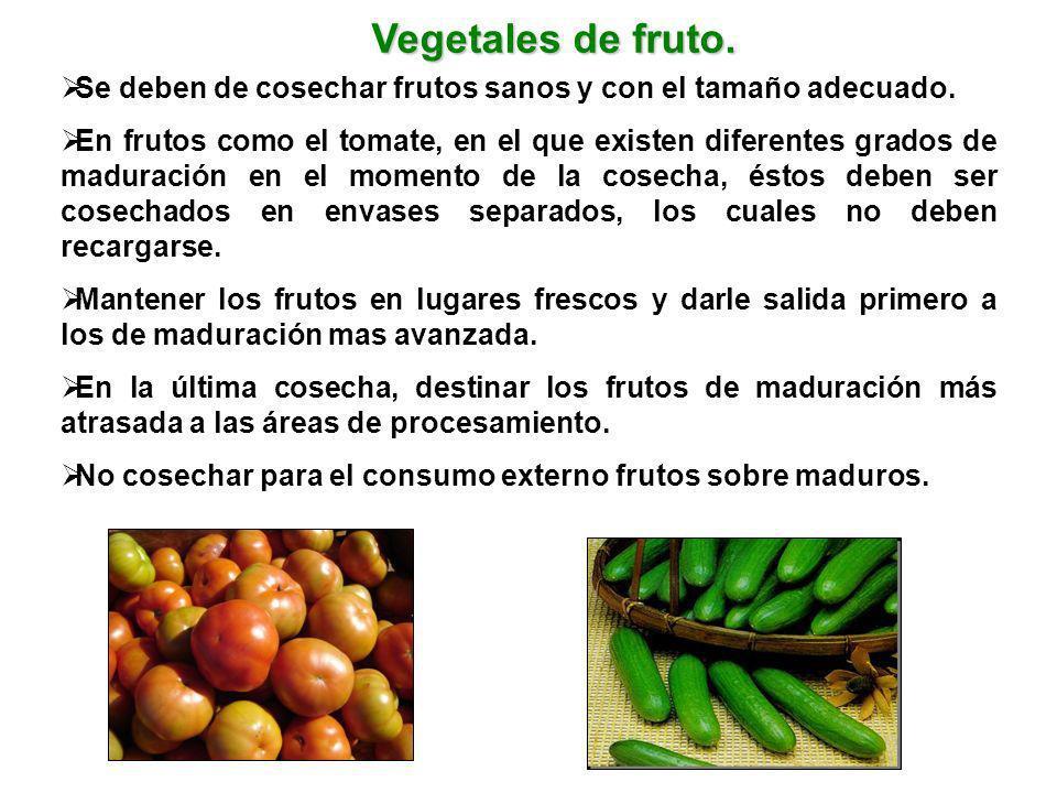 Vegetales de fruto. Se deben de cosechar frutos sanos y con el tamaño adecuado.