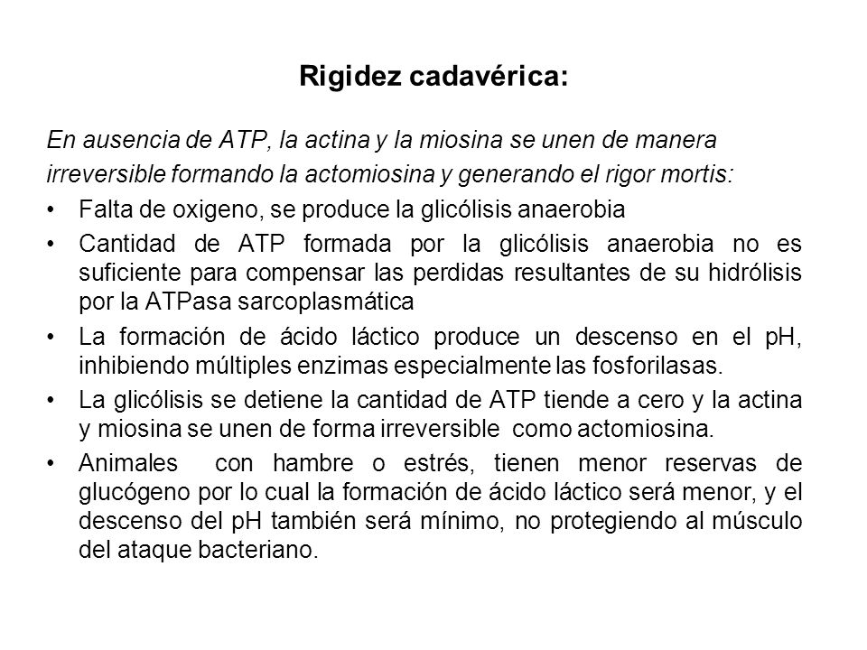 Rigidez cadavérica:En ausencia de ATP, la actina y la miosina se unen de manera. irreversible formando la actomiosina y generando el rigor mortis: