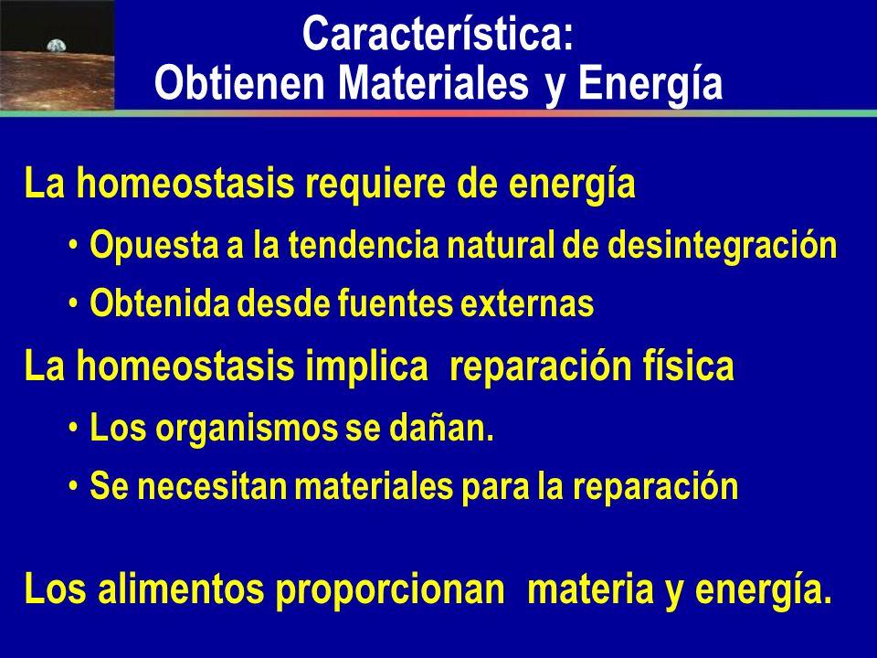 Característica: Obtienen Materiales y Energía