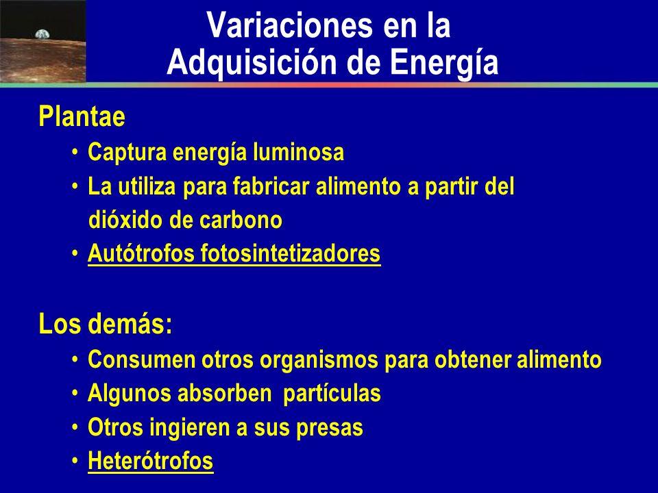 Variaciones en la Adquisición de Energía
