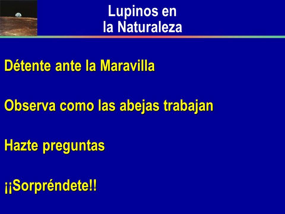 Lupinos en la Naturaleza
