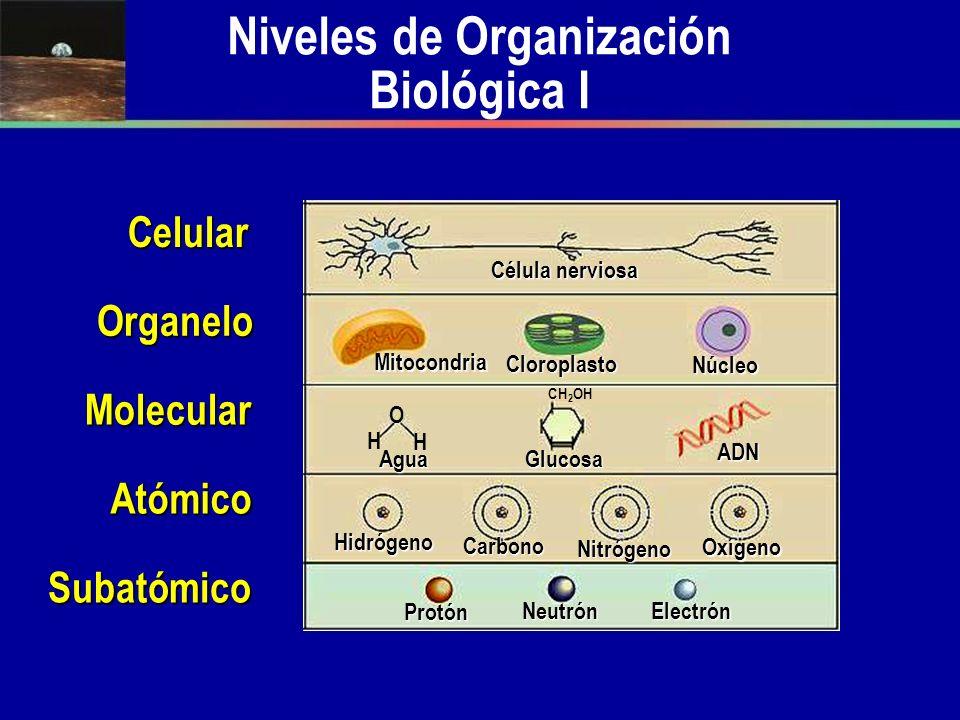 Niveles de Organización Biológica I