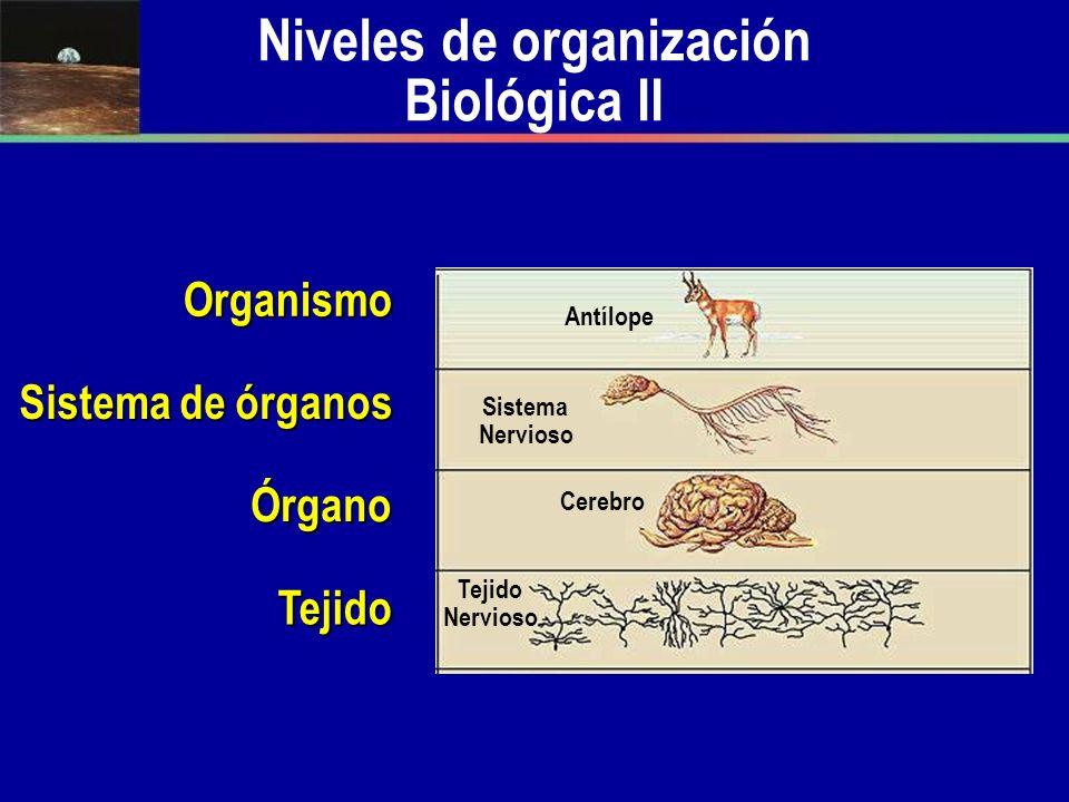 Niveles de organización Biológica II