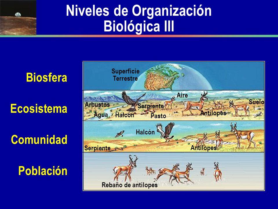 Niveles de Organización Biológica III