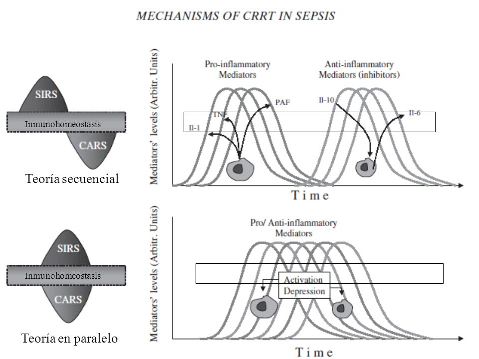 Teoría secuencial Teoría en paralelo Inmunohomeostasis