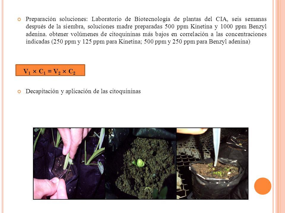 Preparación soluciones: Laboratorio de Biotecnología de plantas del CIA, seis semanas después de la siembra, soluciones madre preparadas 500 ppm Kinetina y 1000 ppm Benzyl adenina. obtener volúmenes de citoquininas más bajos en correlación a las concentraciones indicadas (250 ppm y 125 ppm para Kinetina; 500 ppm y 250 ppm para Benzyl adenina)