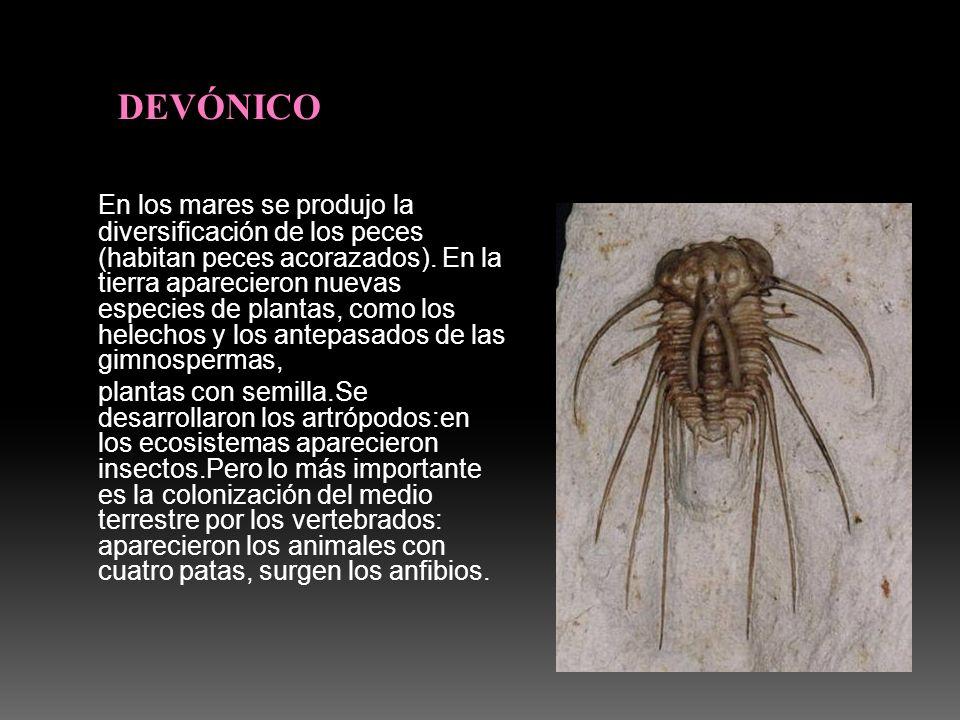 DEVÓNICO
