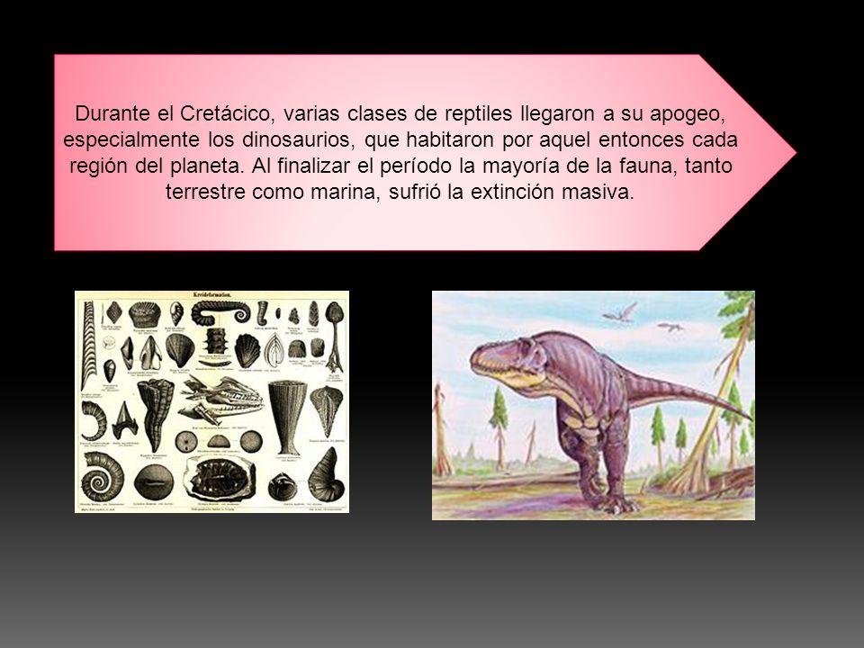 Durante el Cretácico, varias clases de reptiles llegaron a su apogeo, especialmente los dinosaurios, que habitaron por aquel entonces cada región del planeta.