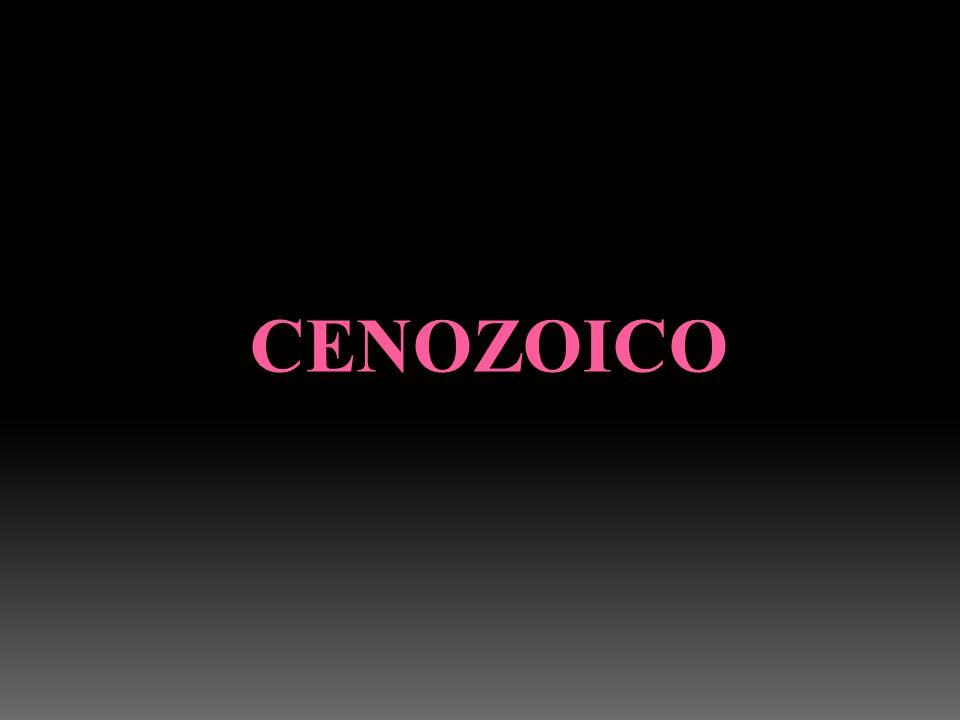 CENOZOICO