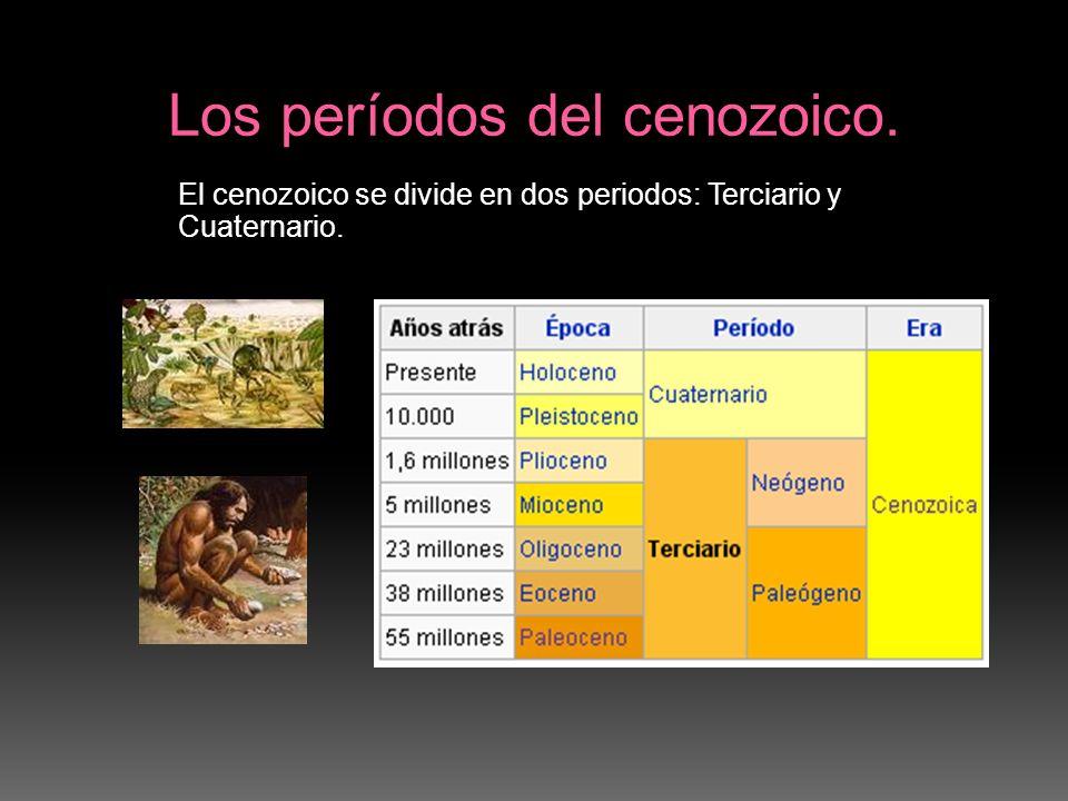 Los períodos del cenozoico.