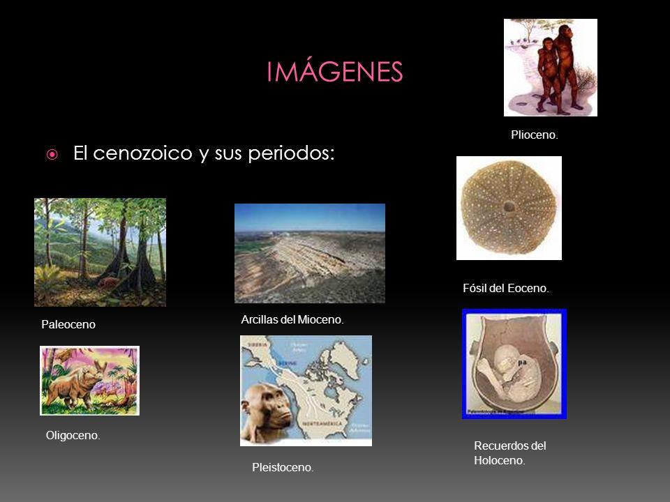 IMÁGENES El cenozoico y sus periodos: Plioceno. Fósil del Eoceno.