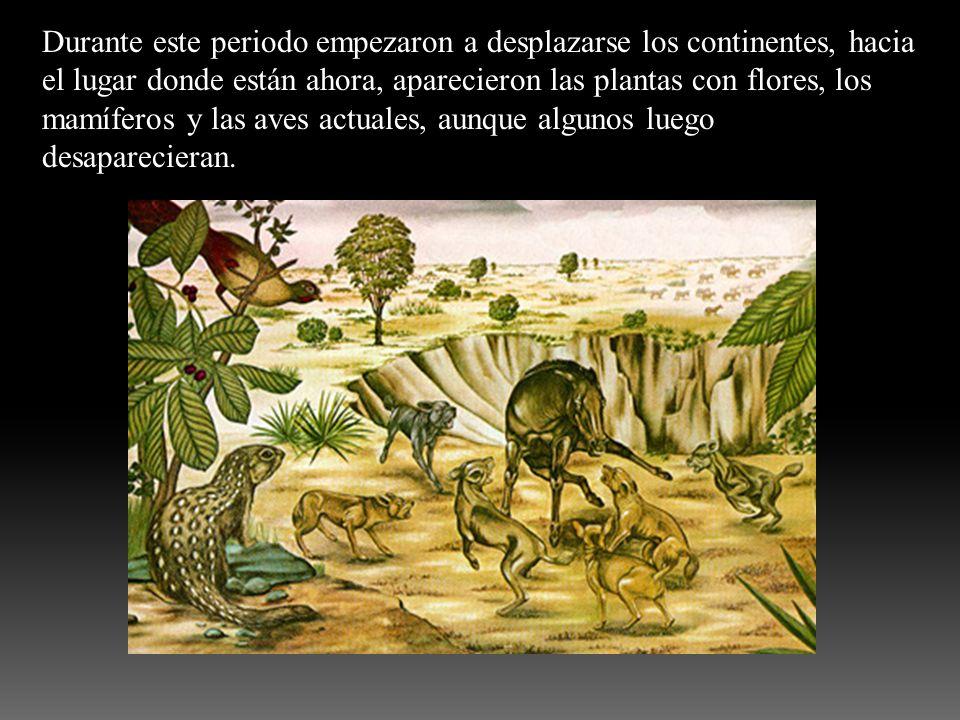 Durante este periodo empezaron a desplazarse los continentes, hacia el lugar donde están ahora, aparecieron las plantas con flores, los mamíferos y las aves actuales, aunque algunos luego desaparecieran.