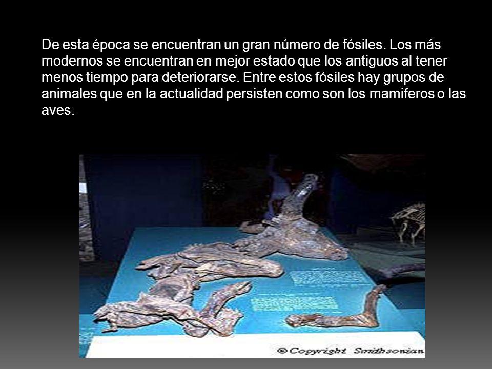 De esta época se encuentran un gran número de fósiles