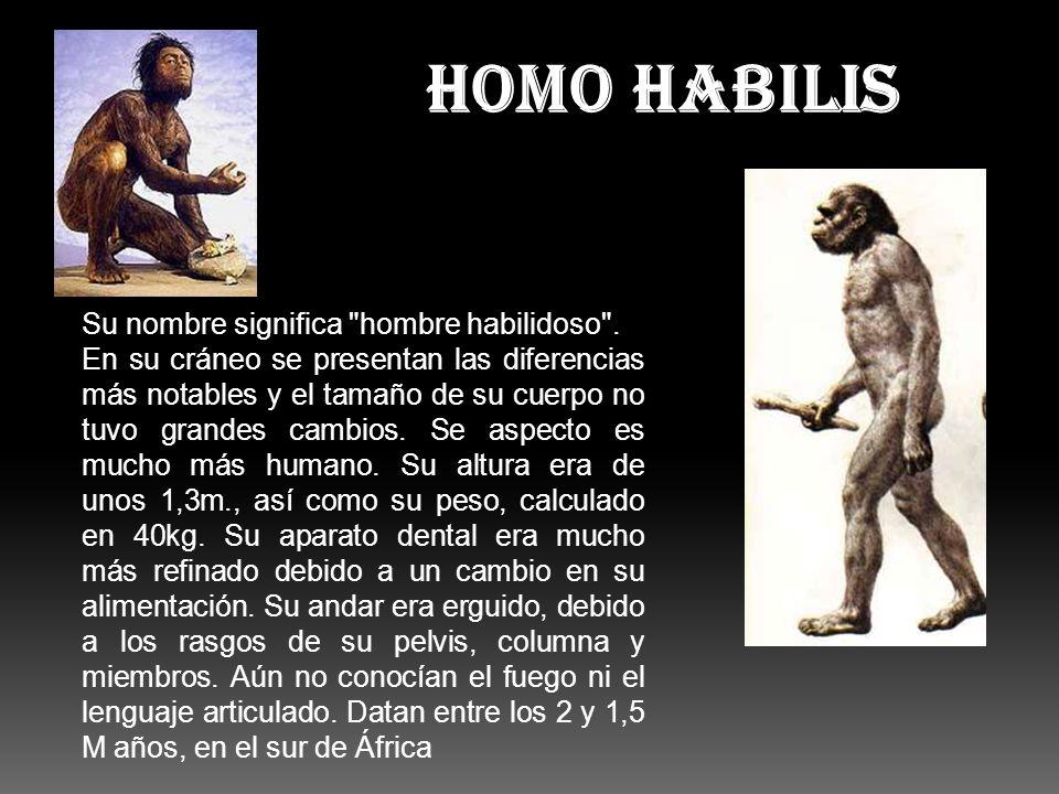 HOMO HABILIS Su nombre significa hombre habilidoso .