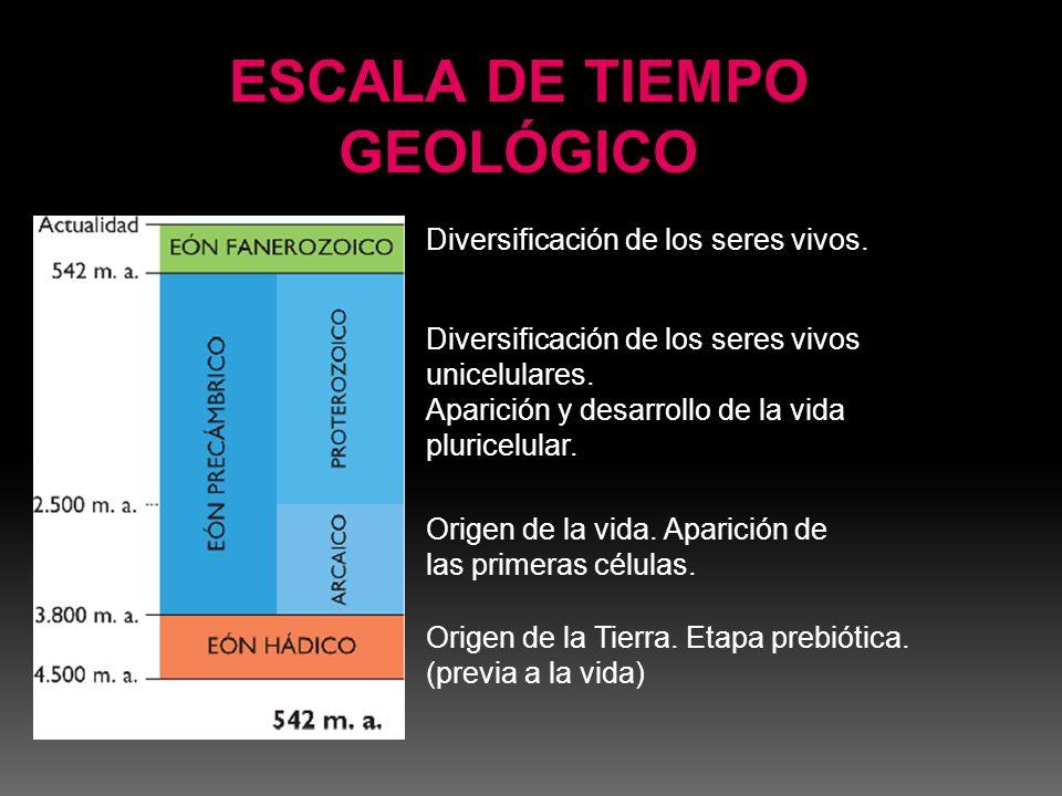 ESCALA DE TIEMPO GEOLÓGICO