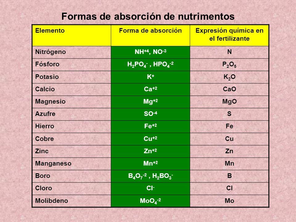 Formas de absorción de nutrimentos