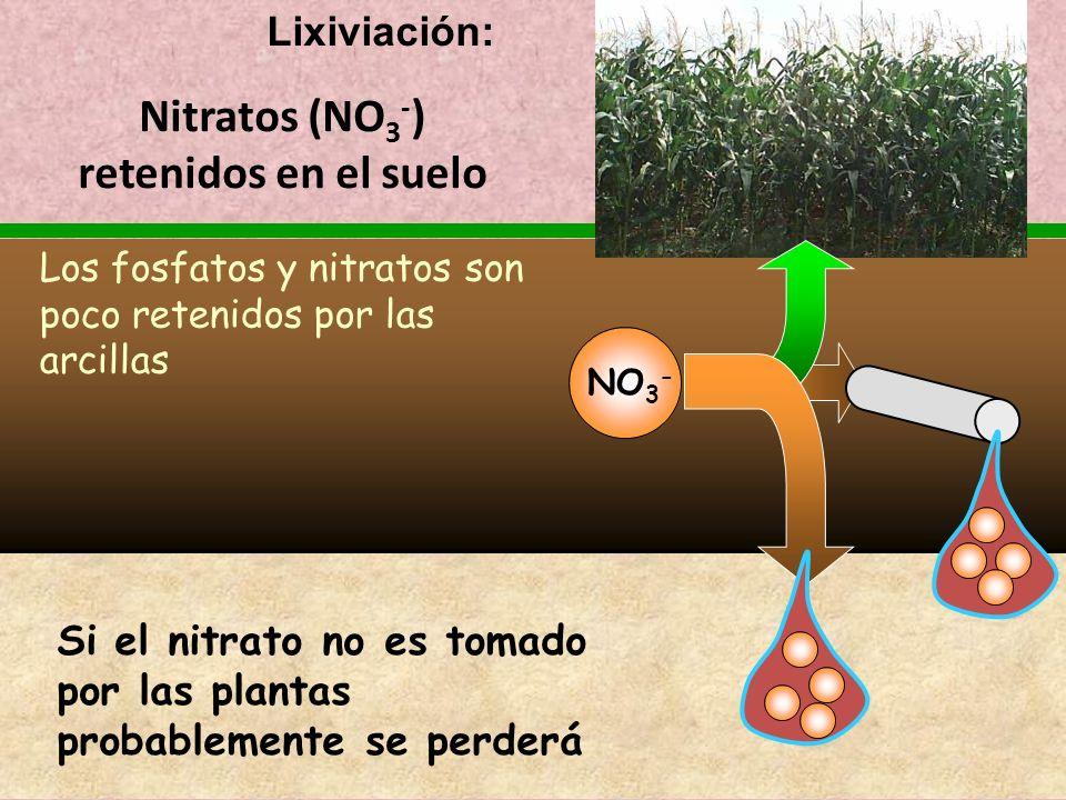 Nitratos (NO3-) retenidos en el suelo
