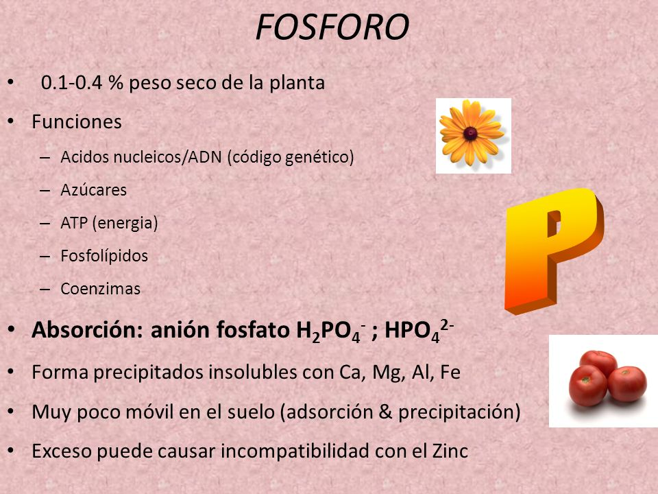 FOSFORO P Absorción: anión fosfato H2PO4- ; HPO42-