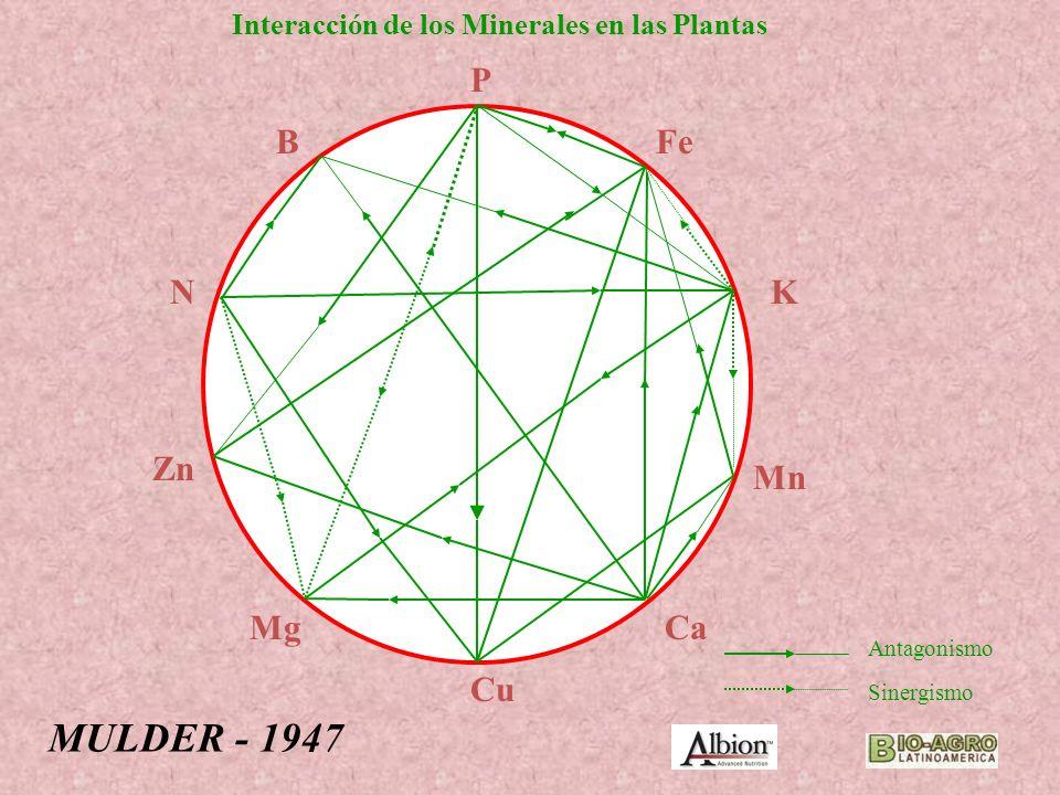 MULDER - 1947 P B Fe N K Zn Mn Mg Ca Cu
