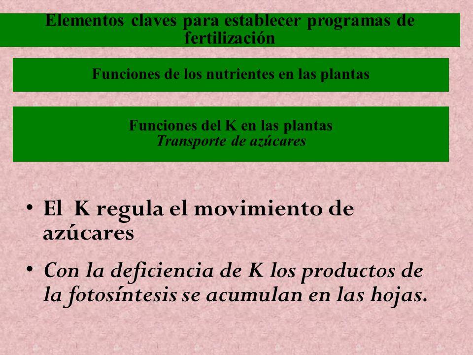 El K regula el movimiento de azúcares