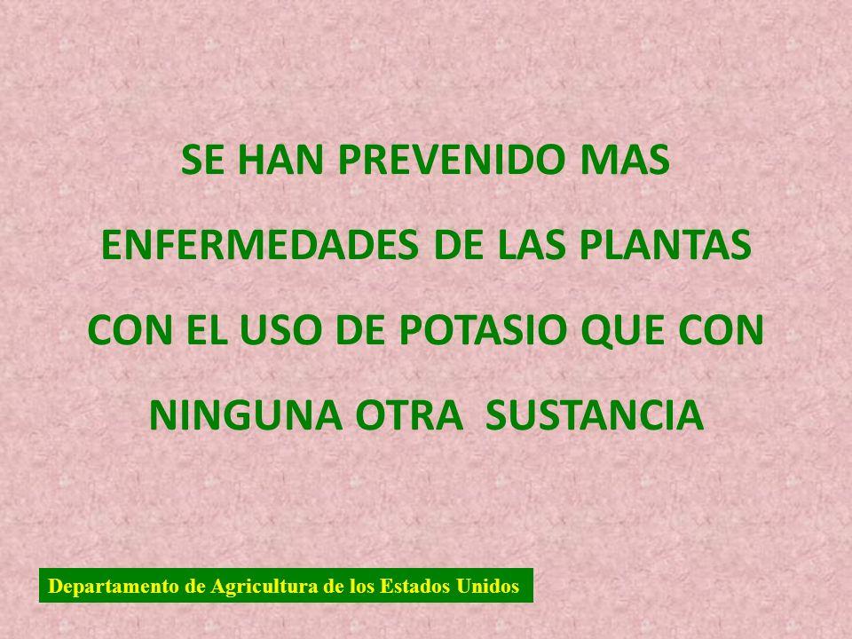 SE HAN PREVENIDO MAS ENFERMEDADES DE LAS PLANTAS CON EL USO DE POTASIO QUE CON NINGUNA OTRA SUSTANCIA