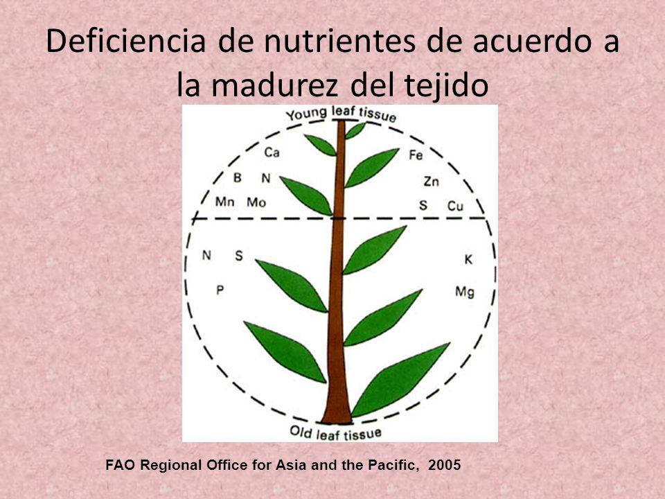 Deficiencia de nutrientes de acuerdo a la madurez del tejido