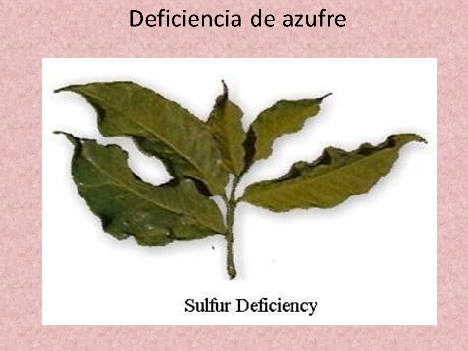 Deficiencia de azufre