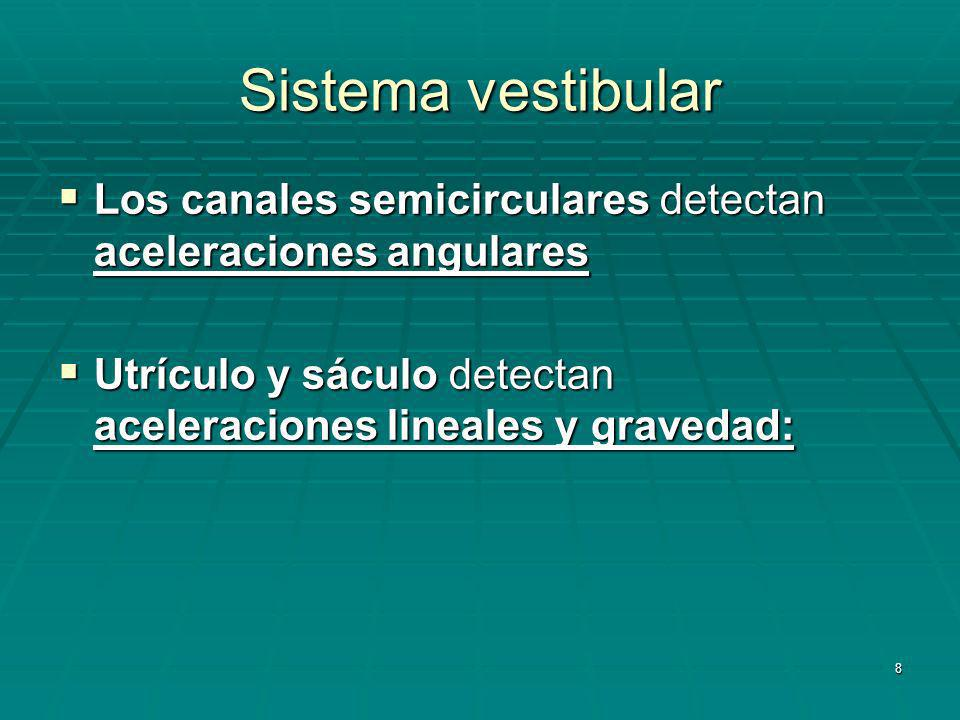 Sistema vestibular Los canales semicirculares detectan aceleraciones angulares.