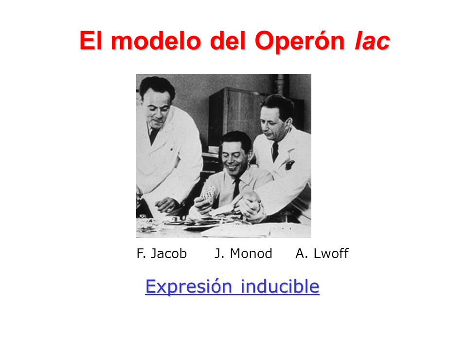 El modelo del Operón lac
