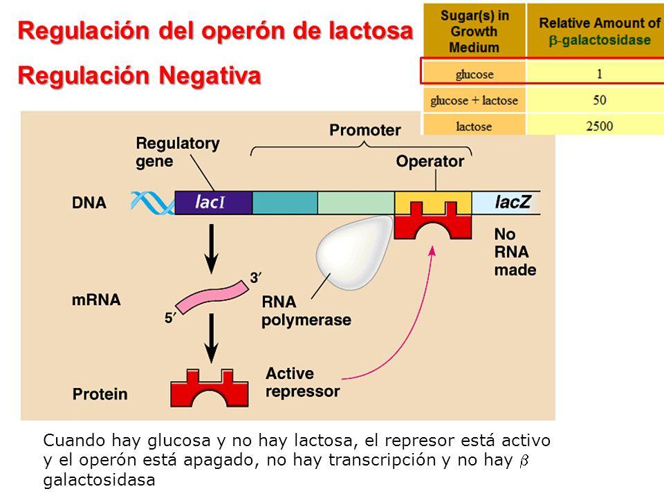 Regulación del operón de lactosa Regulación Negativa