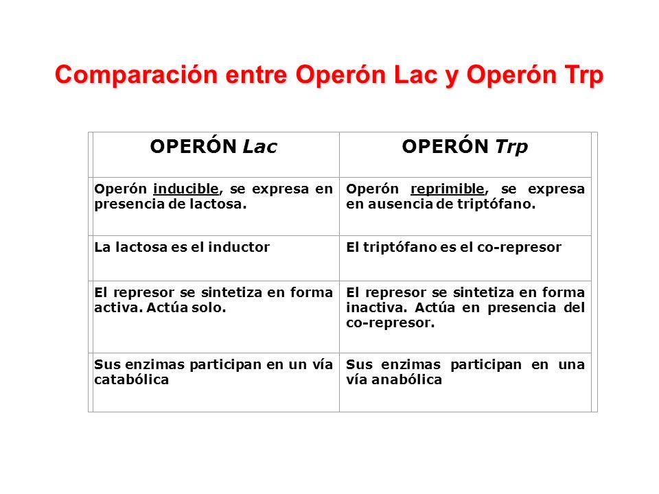 Comparación entre Operón Lac y Operón Trp