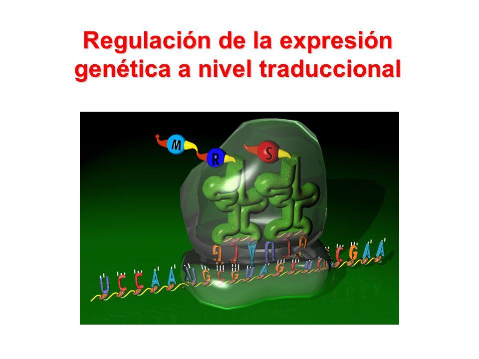 Regulación de la expresión genética a nivel traduccional