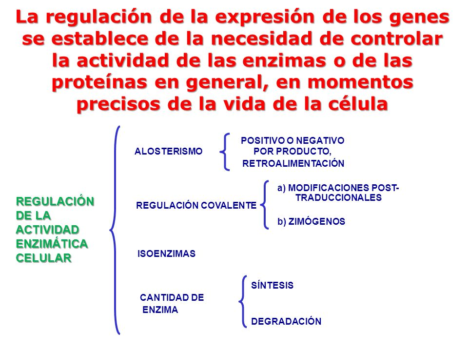 La regulación de la expresión de los genes se establece de la necesidad de controlar la actividad de las enzimas o de las proteínas en general, en momentos precisos de la vida de la célula