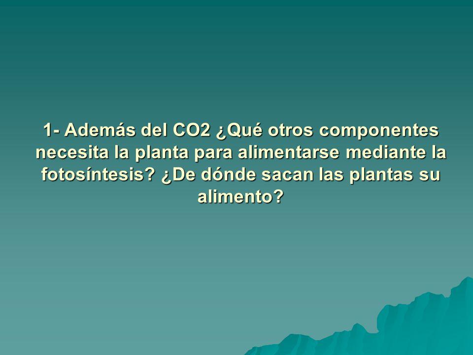 1- Además del CO2 ¿Qué otros componentes necesita la planta para alimentarse mediante la fotosíntesis.