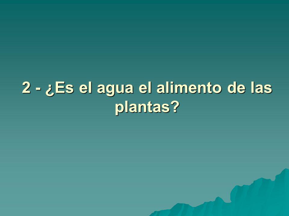 2 - ¿Es el agua el alimento de las plantas